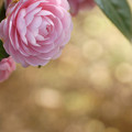 Photos: 乙女の春