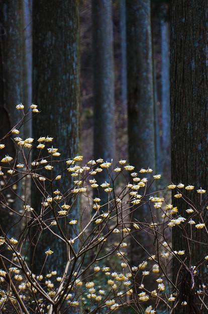 森林の点描画