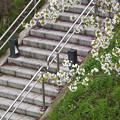 堤防の階段