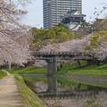 Photos: 城と桜とマンションと