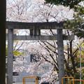 Photos: 鳥居の向こうは春