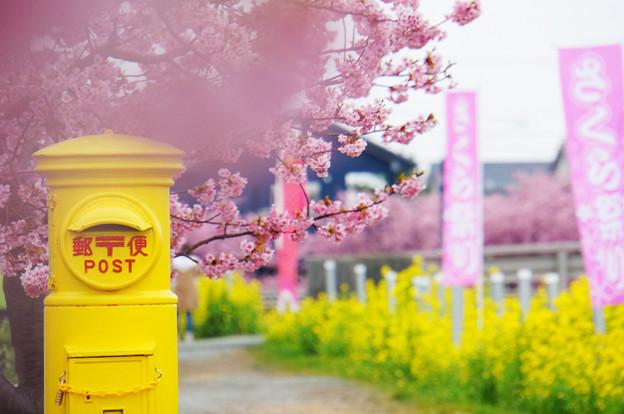 桜祭りは過ぎても