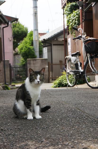 路地で出会った猫さん