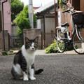 Photos: 路地で出会った猫さん
