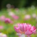 Photos: 花開く