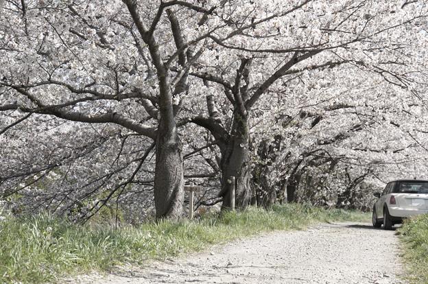 どこにも行けなかった春