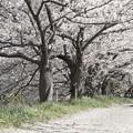 Photos: どこにも行けなかった春