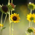 Photos: 空き地の花