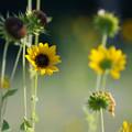 Photos: 夏の日