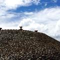 Photos: 墳墓の丘