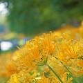 一面の黄色