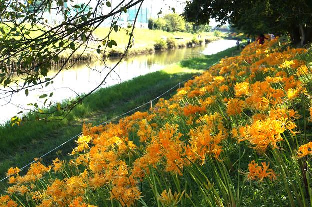 稗田川の彼岸花
