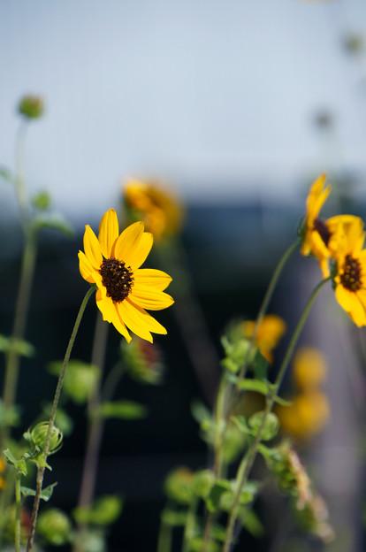 Photos: 夏の忘れ物