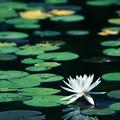 Photos: 水上の夢