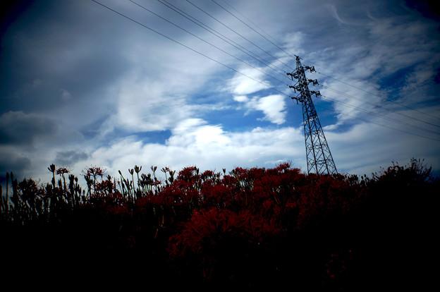 彼岸花の咲く季節