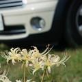 Photos: 彼岸花を撮りに