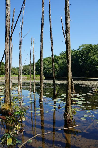 枯れ木も池の賑わい