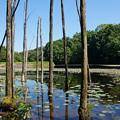 Photos: 枯れ木も池の賑わい