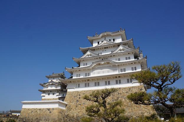 Photos: 松と城