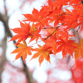 Photos: 真っ赤な秋