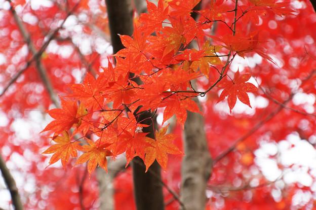 出会えた秋