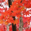 Photos: 出会えた秋
