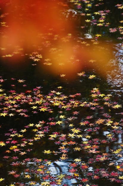 秋を散らして