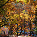 Photos: 秋を行く
