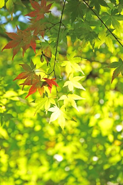 始まりの秋