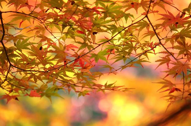 秋色モザイク