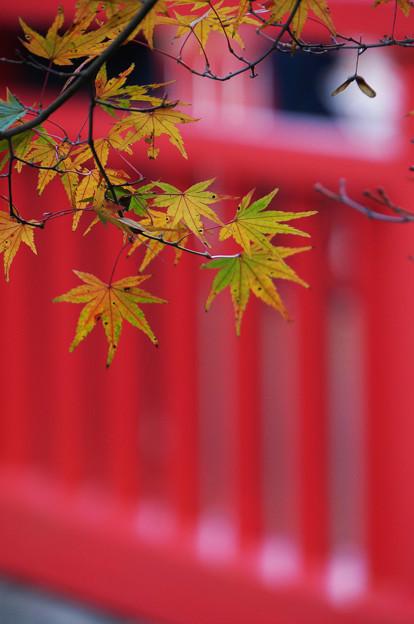 Photos: 紅葉の橋