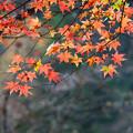 Photos: 秋のきざはし