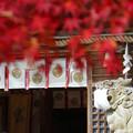 Photos: 狛犬マスク