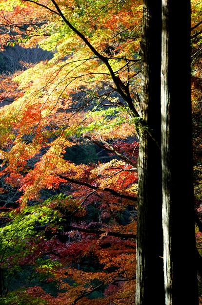 Photos: 紅葉の朝