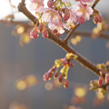 Photos: 春の夕暮れ