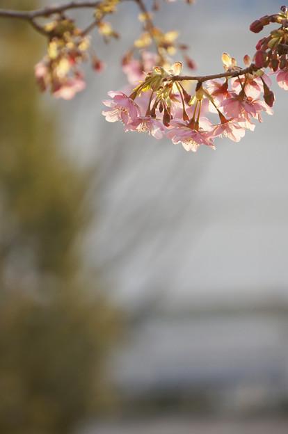 Photos: 春いろの指先