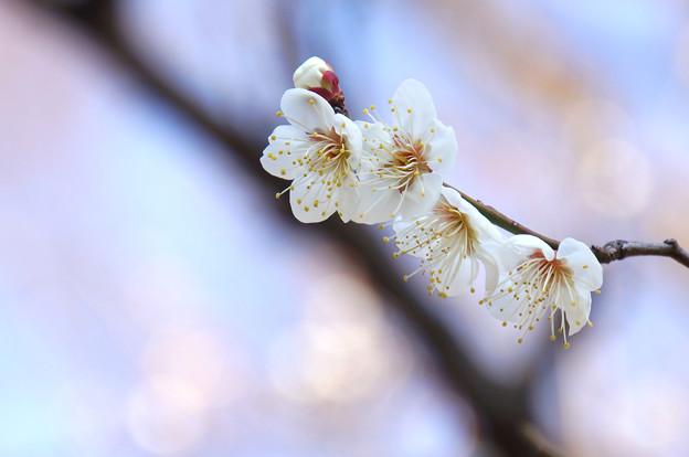 Photos: 寿ぐ春