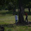 Photos: 木登りやってみる