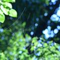 蜘蛛の巣-PZ