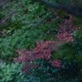 箕面公園の紅葉-PZ
