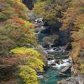 Photos: 秋浅し