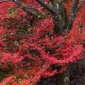 Photos: 桜を抱いて