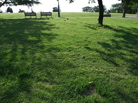芝とベンチ