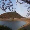 夕陽に染まる甲山と桜