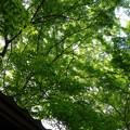 緑の世界への入口♪♪