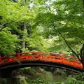 御土居の鶯橋
