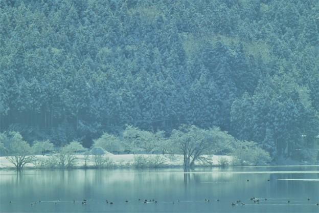大岩山と余呉の鳥達