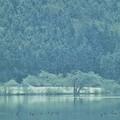 写真: 大岩山と余呉の鳥達