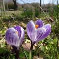 春の芽生え♪♪