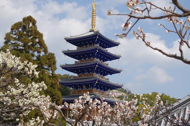 梅と五重塔